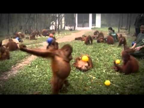 Video Musical: GRILLEX – ORANGUTAN