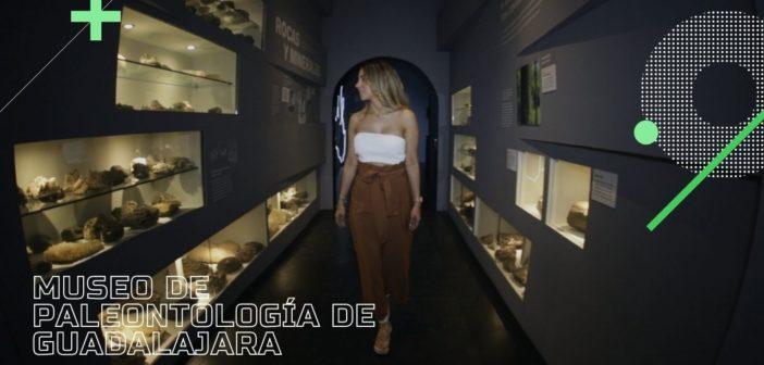 Volver al pasado en el museo de paleontología de Guadalajara.